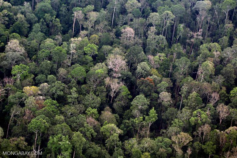 Sumatran rainforest [riau_1381]