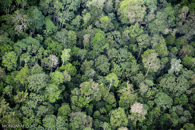 Sumatran rainforest [riau_1387]