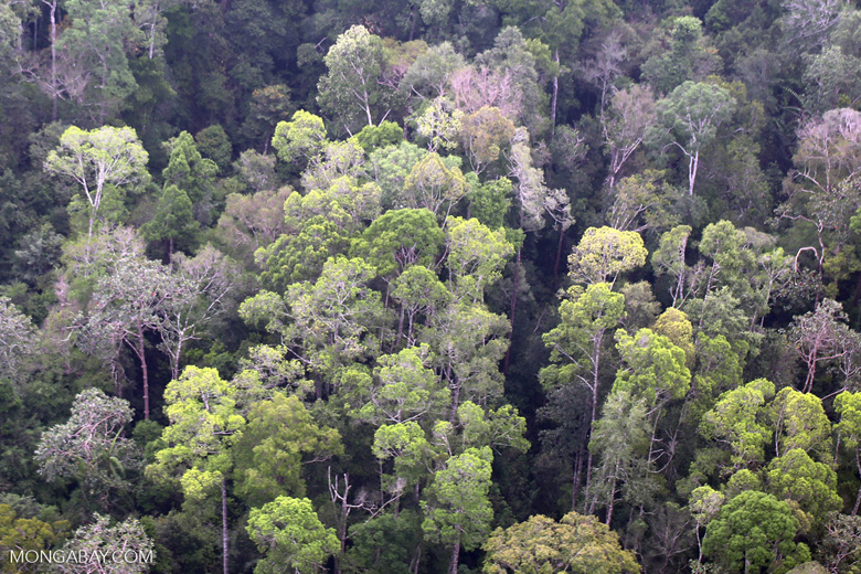 Sumatran rainforest [riau_1388]