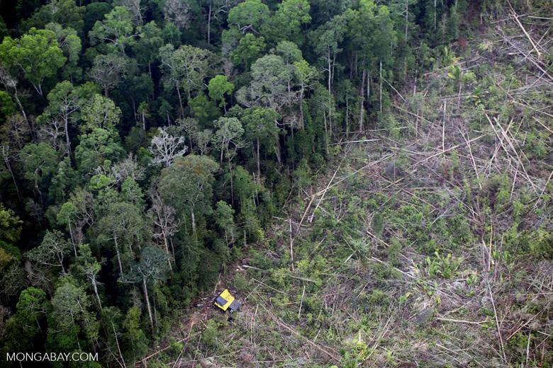 Deforestation in Sumatra [riau_1389]