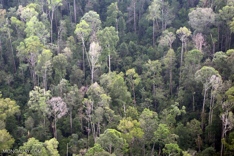 Sumatran rainforest [riau_1391]