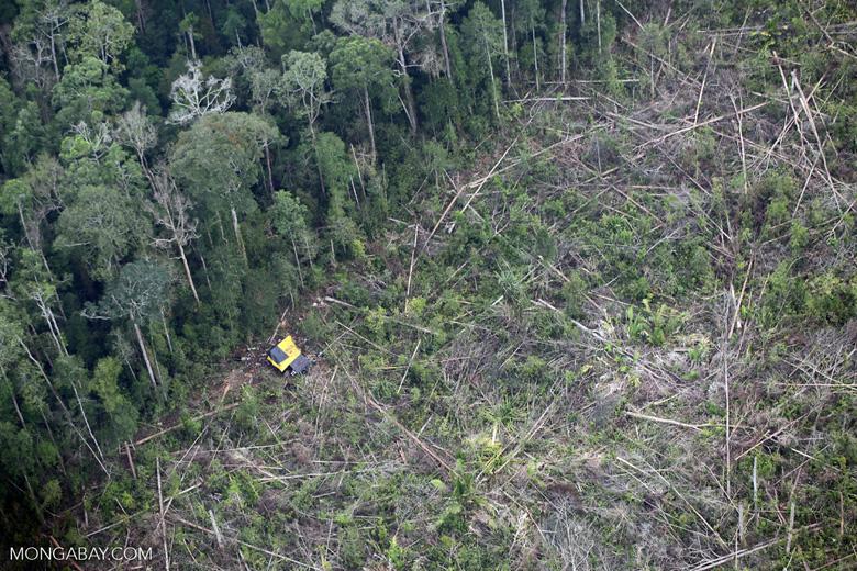 Deforestation in Sumatra [riau_1394]