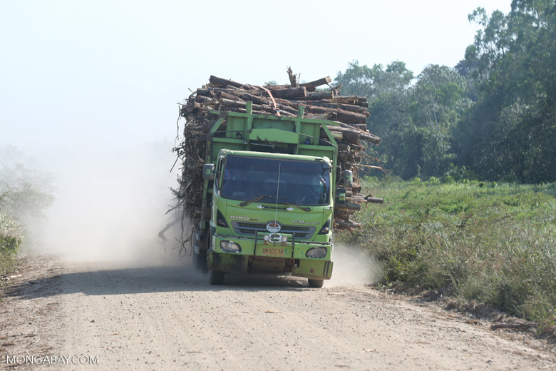 Truck carrying acacia logs