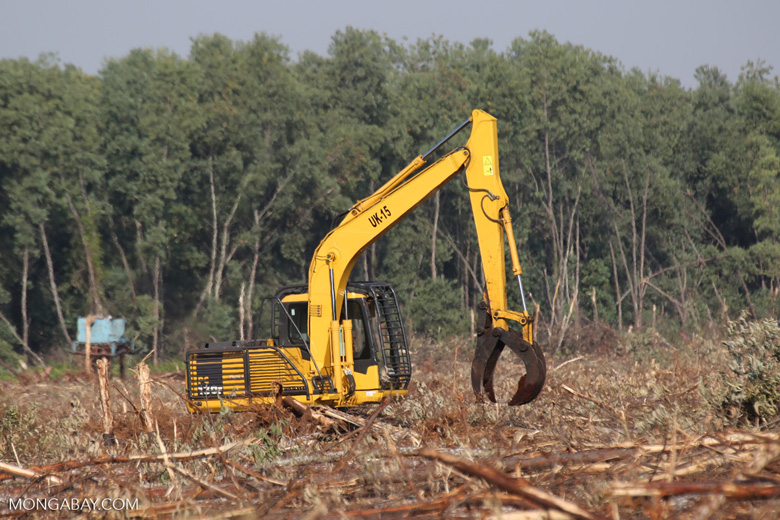 Excavator harvesting acacia trees