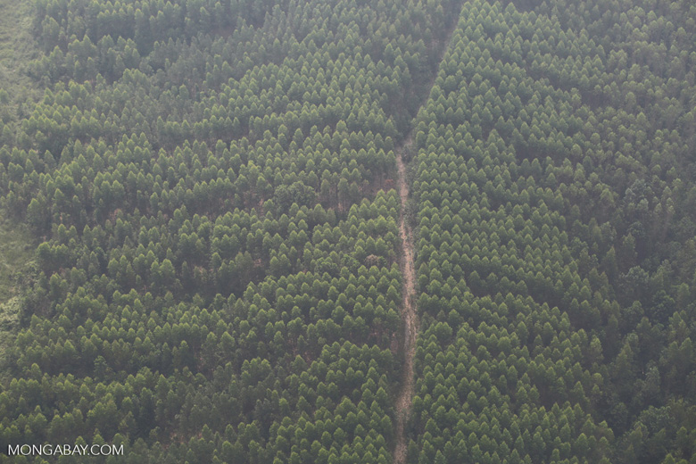 Aerial view of an Indonesian acacia plantation