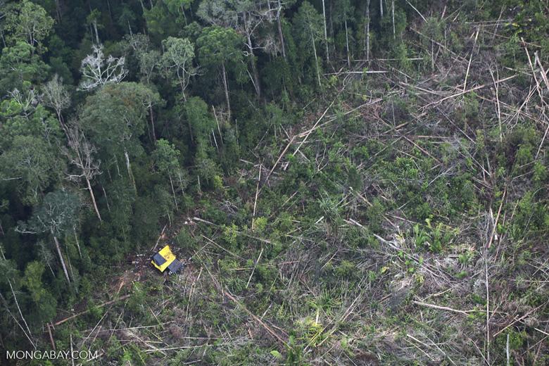 Deforestation in Sumatra [riau_1468]