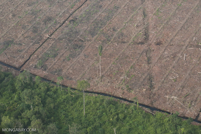 Deforested peatland and woodpulp plantations in Riau