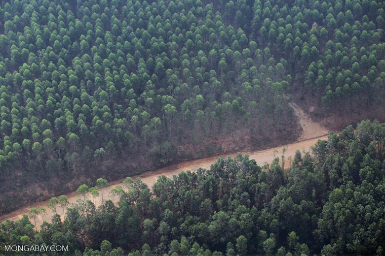 Industrial acacia plantation [riau_1498]
