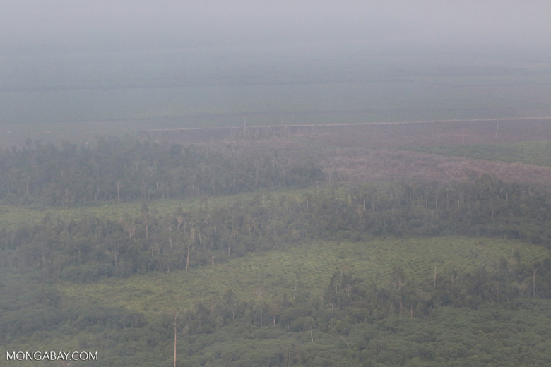 Deforested peatland and woodpulp plantations in Riau [riau_1499]