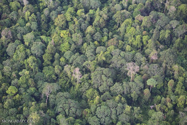 Rainforest and jungle rubber in Sumatra [riau_1507]