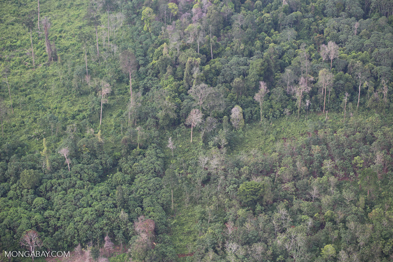 Forest clearing in Sumatra