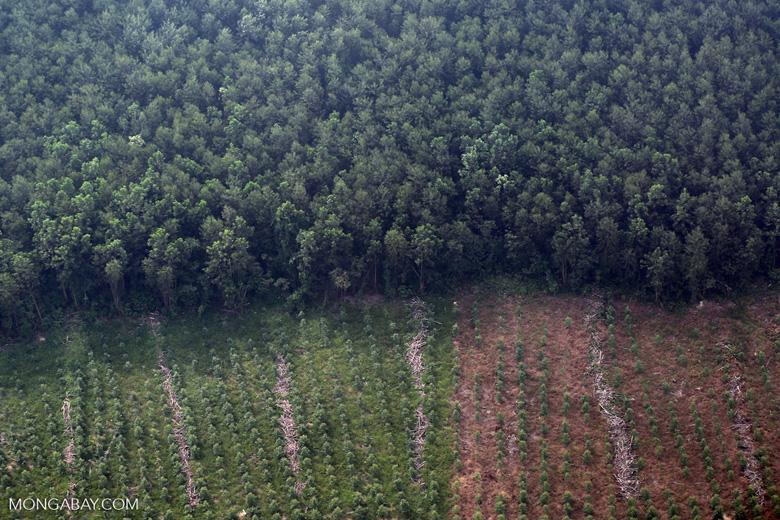 Acacia plantation [riau_5071]