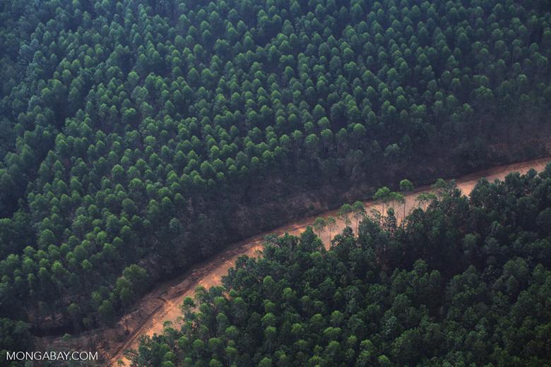 Acacia plantation [riau_5081]