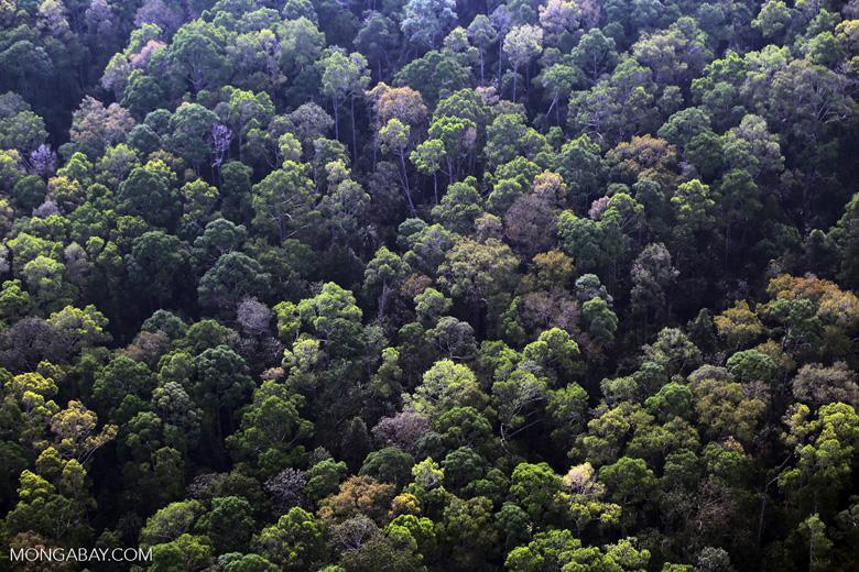 Riau rainforest [riau_5095]