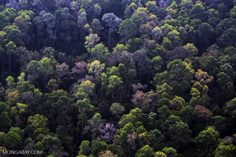 Riau rainforest [riau_5100]