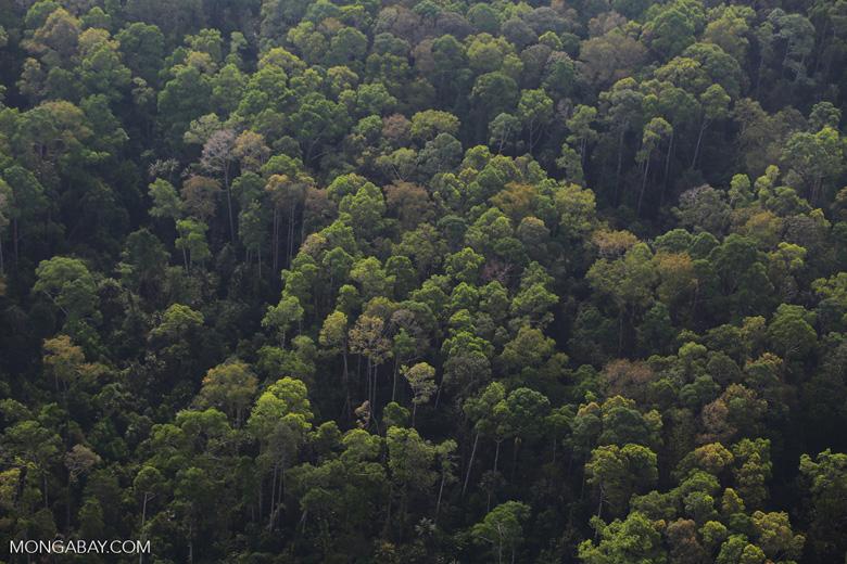 Riau rainforest [riau_5109]