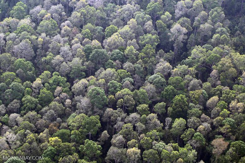 Riau rainforest [riau_5131]