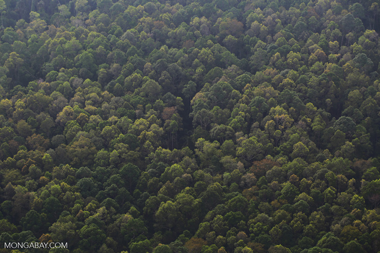 Riau rainforest [riau_5138]