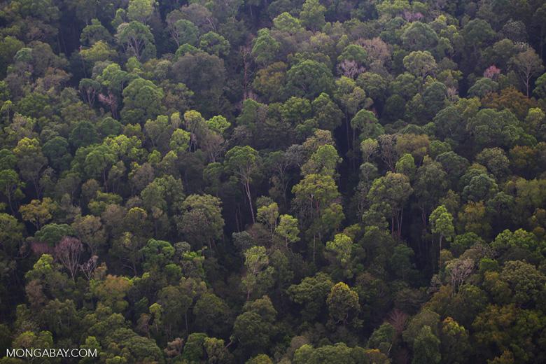 Lowland rainforest in Riau [riau_5145]