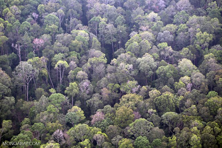 Riau rainforest [riau_5150]