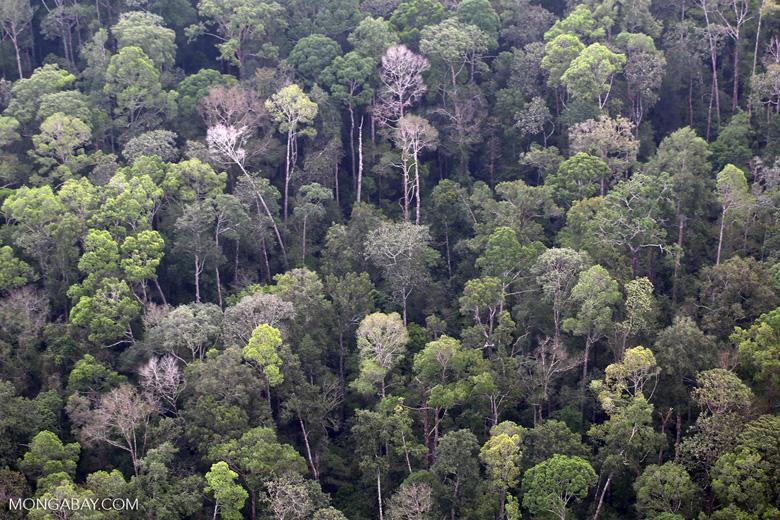 Riau peat forest [riau_5157]