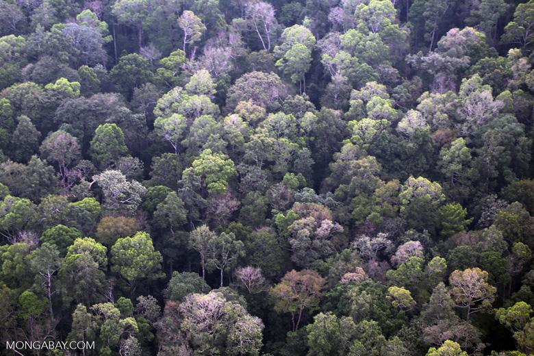 Riau peat forest [riau_5159]