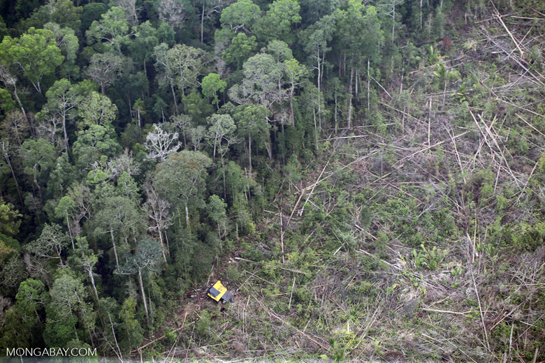 Clearing of rainforest in Riau