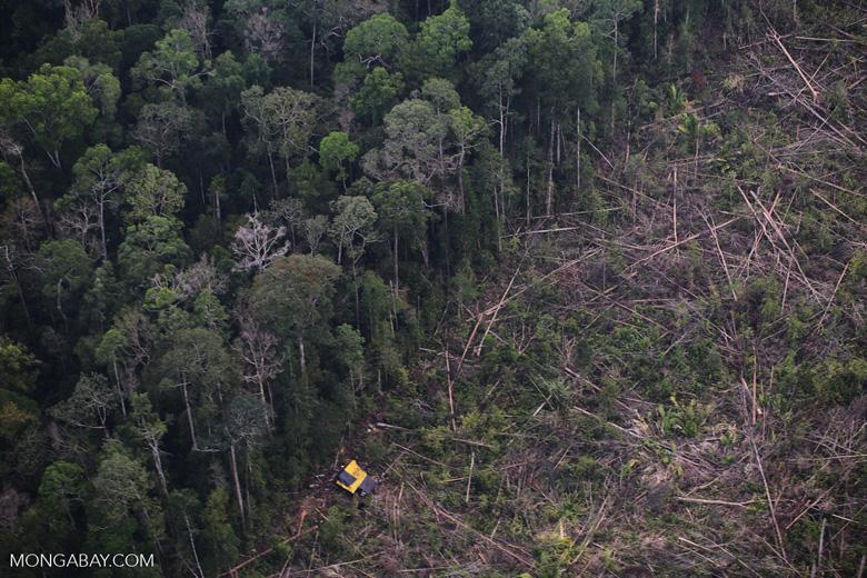Clearing of rainforest in Riau [riau_5164]