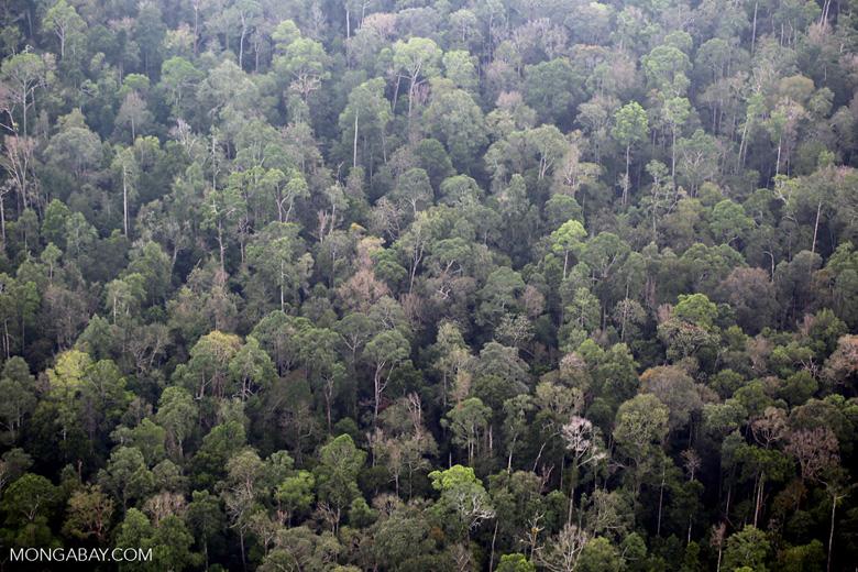 Rain forest in Riau [riau_5168]
