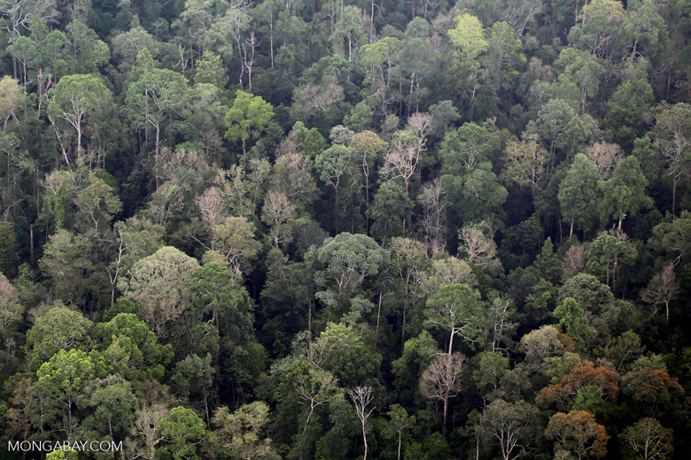 Rain forest in Riau [riau_5171]