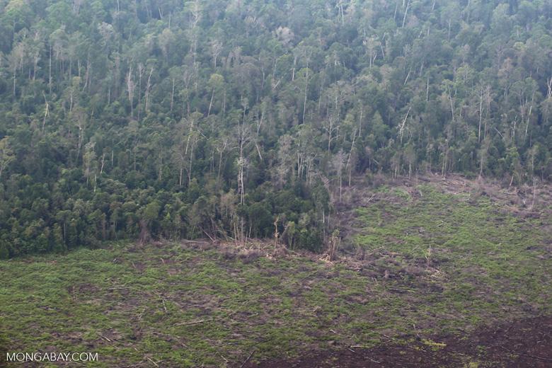 Deforestation in Riau [riau_5181]