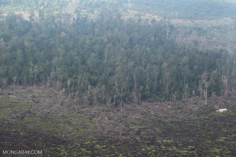 Deforestation in Riau [riau_5182]