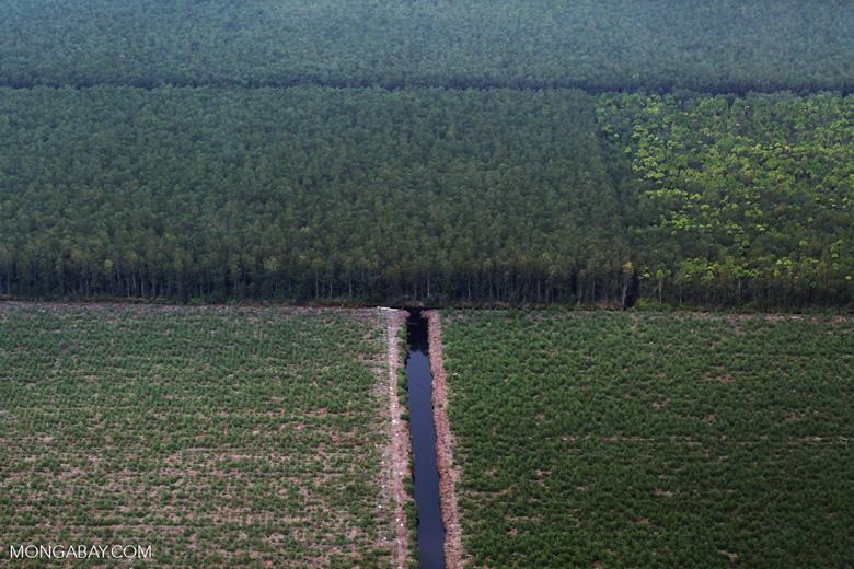 Woodpulp plantation [riau_5203]
