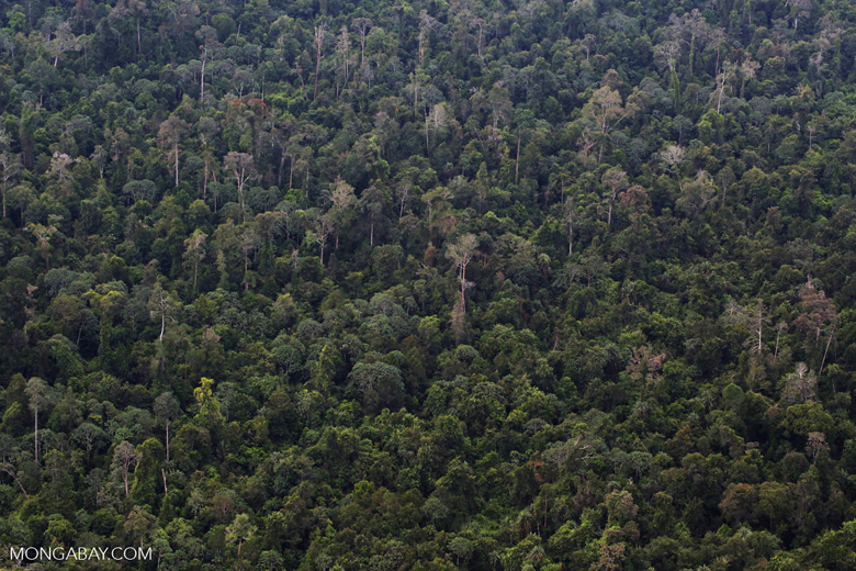 Logged over rainforest in Riau