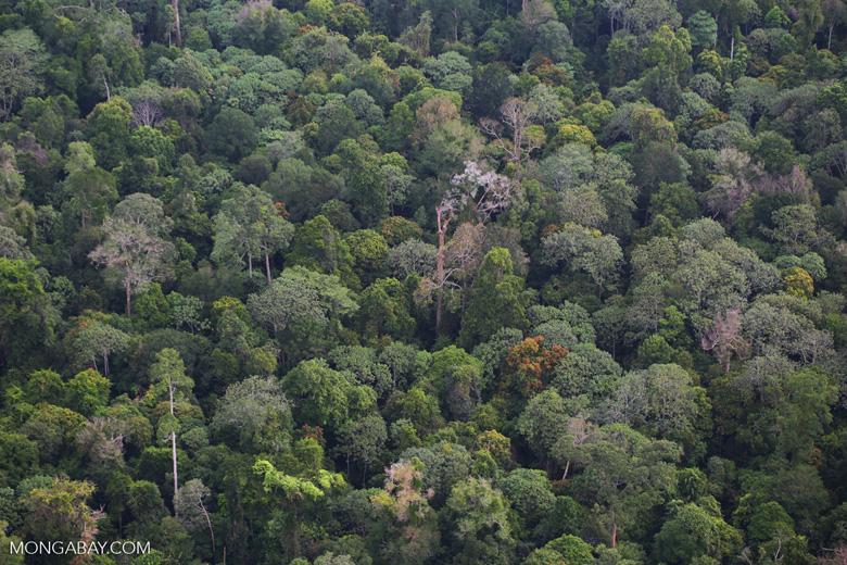 Rainforest in Riau [riau_5250]