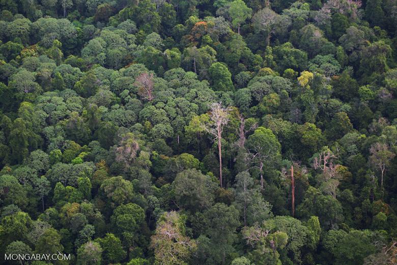 Rainforest in Riau [riau_5252]