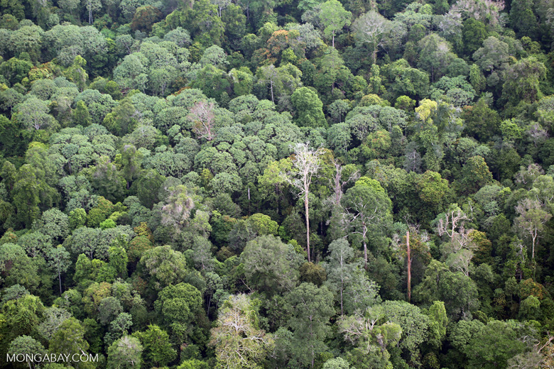 Rainforest in Riau [riau_5253]