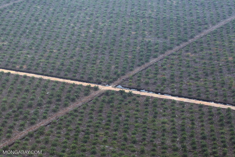 Oil palm plantation [riau_5273]