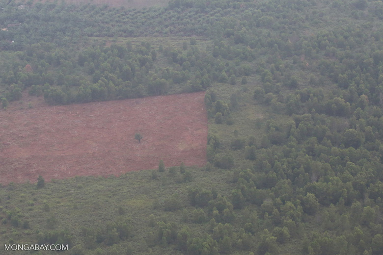 Land-clearing for  oil palm [riau_5280]