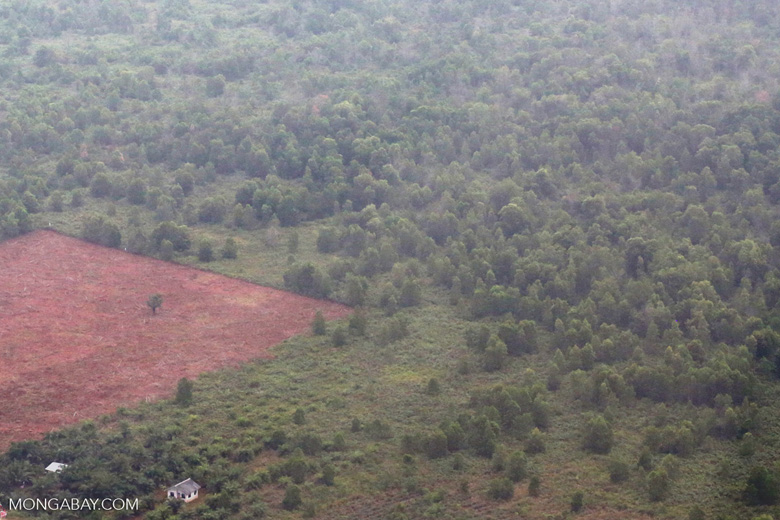 Land-clearing for  oil palm [riau_5283]