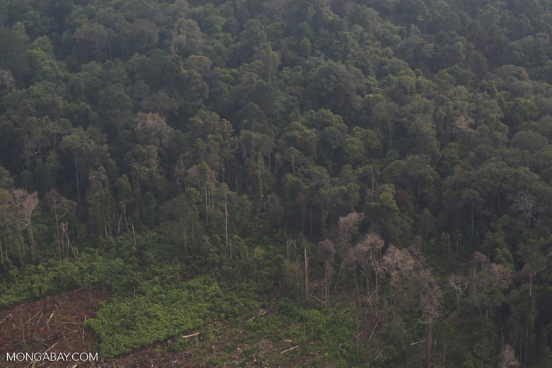 Land-clearing for  oil palm [riau_5291]