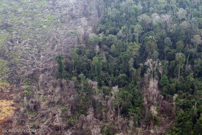Rainforest damaged by fire in Riau