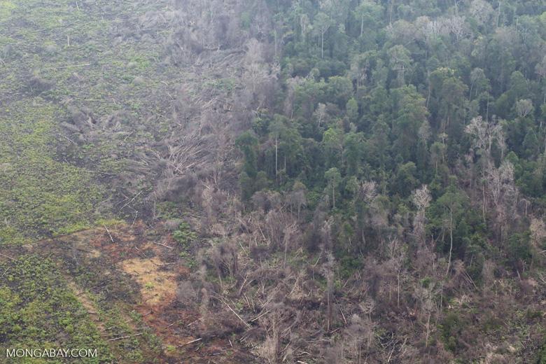Rainforest burned for oil palm in Sumatra