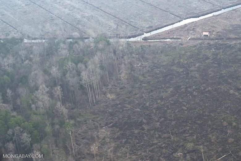 Rainforest burned for oil palm in Riau [riau_5306]