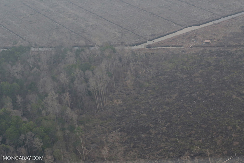 Peat forest damaged by fire in Sumatra [riau_5307]
