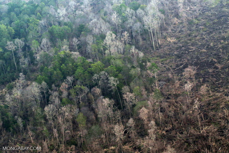 Peat forest damaged by fire in Riau