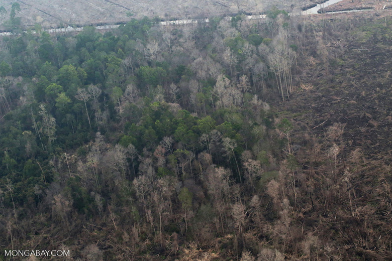 Rainforest damaged by fire in Riau [riau_5309]