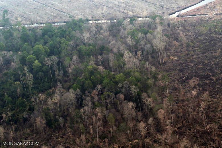 Rainforest burned for oil palm in Riau [riau_5310]