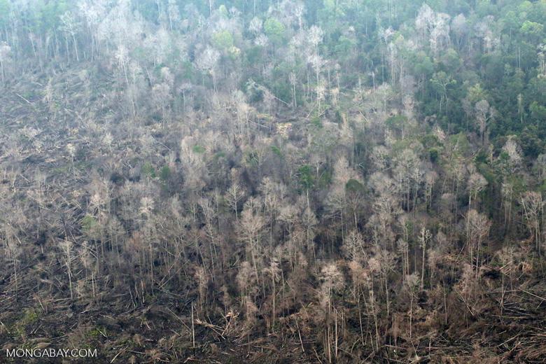 Burned forest in Sumatra [riau_5315]