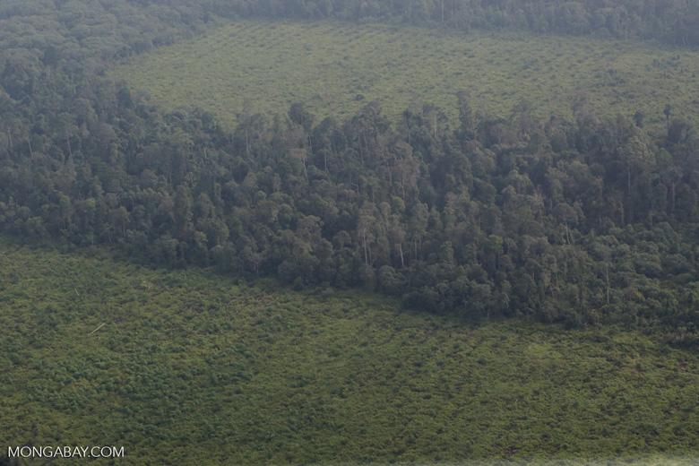 Forest clearing in Riau [riau_5323]